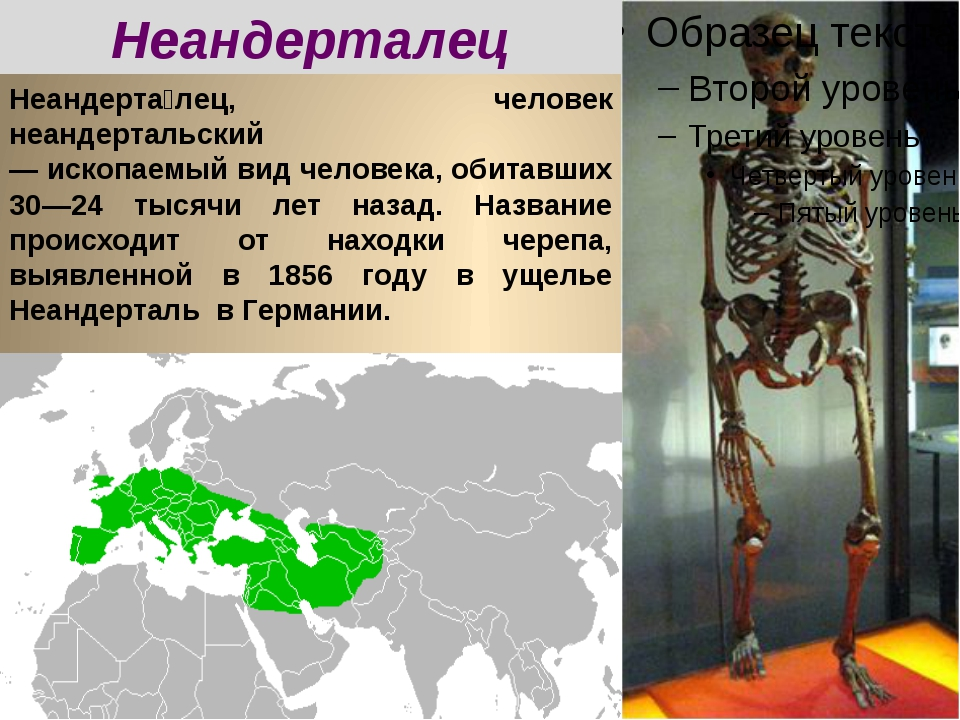 Неандерта́лец, человек неандертальский — ископаемый вид человека, обитавших 3...