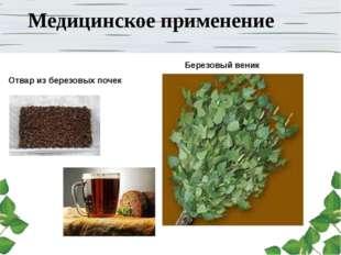 Медицинское применение Березовый веник Отвар из березовых почек