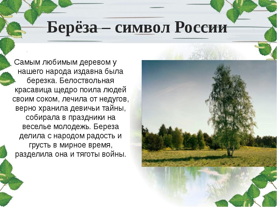 Берёза – символ России Самым любимым деревом у нашего народа издавна была бер...