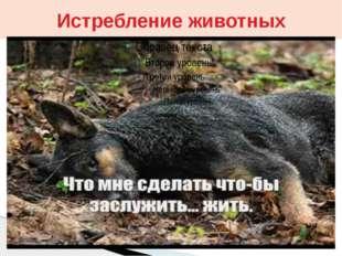 Истребление животных