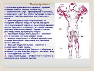 Множество различных упражнений на тренажерах развивают разные группы мышц: гр