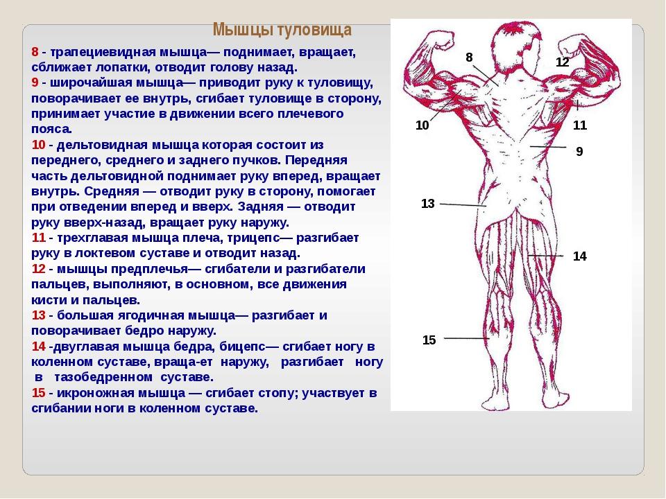 Множество различных упражнений на тренажерах развивают разные группы мышц: гр...