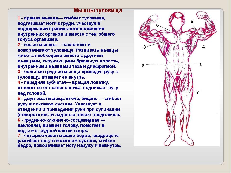 Есть много упражнений, при занятиях атлетической гимнастикой: подтягивания,...