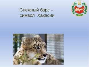 Снежный барс – символ Хакасии