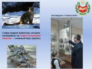 Самое редкое животное, которое изображено на Гербе Республики Хакасия – снеж