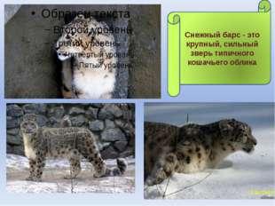 Снежный барс - это крупный, сильный зверь типичного кошачьего облика