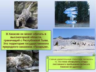 В Хакасии он может обитать в высокогорной области, граничащей с Республикой