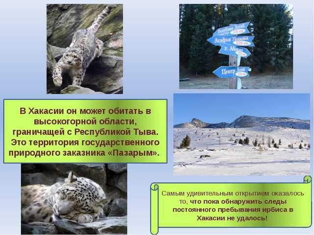 В Хакасии он может обитать в высокогорной области, граничащей с Республикой...