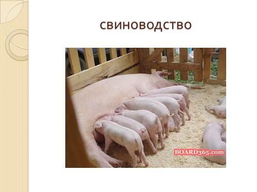 http://volna.org/images/619/500/8.jpg
