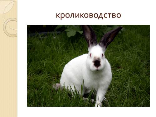 http://volna.org/images/619/500/21.jpg