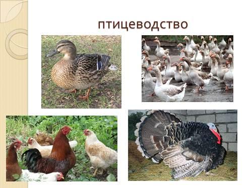 http://volna.org/images/619/500/11.jpg