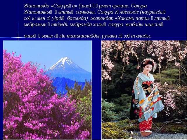 Жапонияда «Сакураға» (шие)-құрмет ерекше. Сакура Жапонияның ұлттық символы. С...