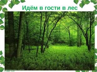 Идём в гости в лес