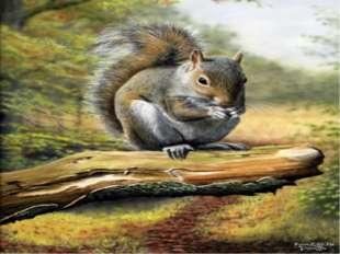Кто в дупле живет, орешки грызет на деревьях резвится, упасть не боится?