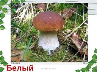 Стоит Лушка- Белая рубашка, А шляпа надета Шоколадного цвета. Белый гриб http