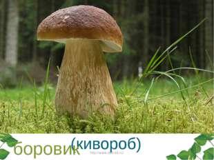 Этот гриб живет под елью, Под ее огромной тенью. Мудрый бородач-старик, Жител