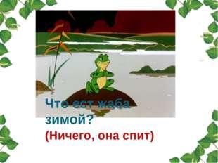 (Ничего, она спит) Что ест жаба зимой?