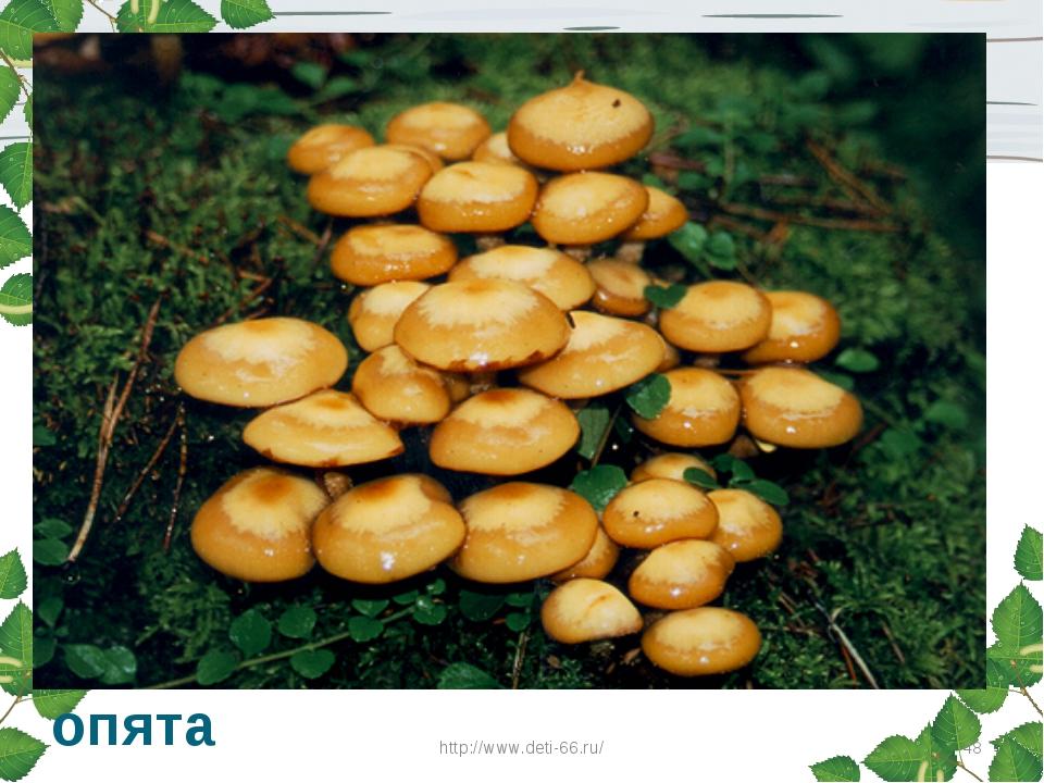 Нет грибов дружней, чем эти, Знают взрослые и дети. На пеньках растут в лесу,...