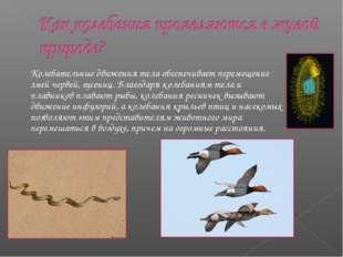 Колебательные движения тела обеспечивает перемещение змей червей, гусениц. Бл
