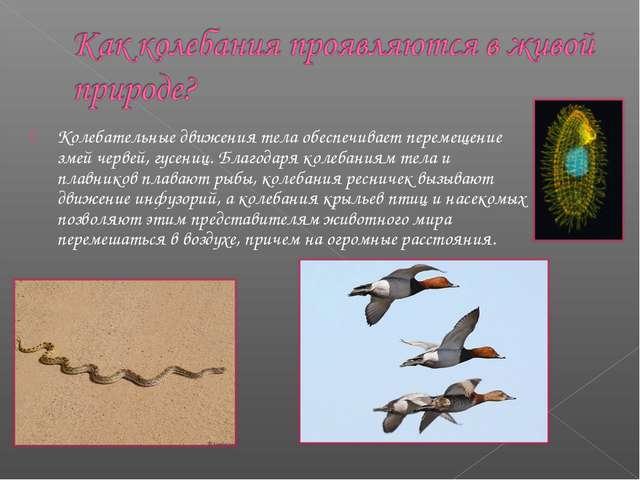 Колебательные движения тела обеспечивает перемещение змей червей, гусениц. Бл...