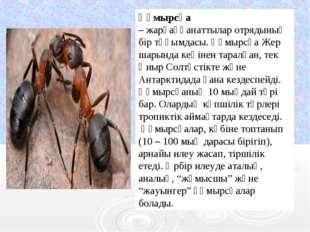 Құмырсқа –жарғаққанаттыларотрядының бір тұқымдасы. Құмырсқа Жер шарында ке