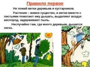 Правило первое Не ломай ветки деревьев и кустарников. Растение – живое сущест