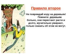 Правило второе Не повреждай кору на деревьях! Помните: деревьям больно, они п