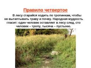 Правило четвертое В лесу старайся ходить по тропинкам, чтобы не вытаптывать т