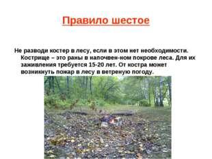 Правило шестое Не разводи костер в лесу, если в этом нет необходимости. Костр