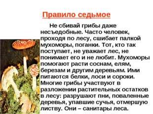 Правило седьмое Не сбивай грибы даже несъедобные. Часто человек, проходя по л