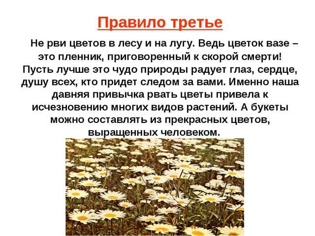 Правило третье Не рви цветов в лесу и на лугу. Ведь цветок вазе – это пленник...