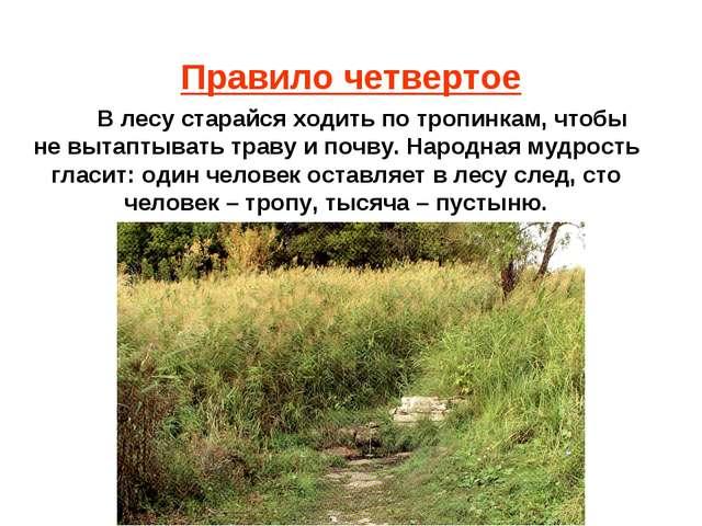 Правило четвертое В лесу старайся ходить по тропинкам, чтобы не вытаптывать т...