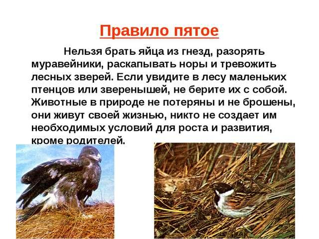 Правило пятое Нельзя брать яйца из гнезд, разорять муравейники, раскапывать н...