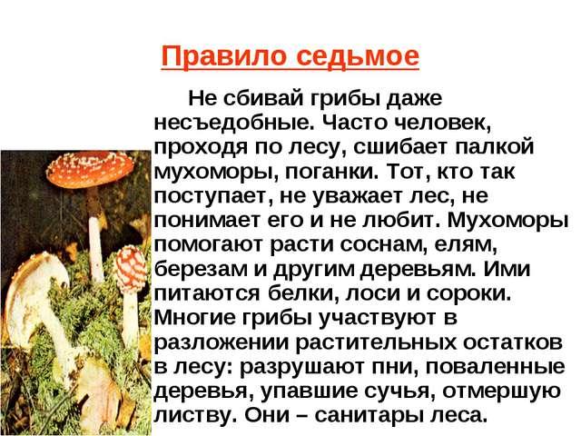 Правило седьмое Не сбивай грибы даже несъедобные. Часто человек, проходя по л...