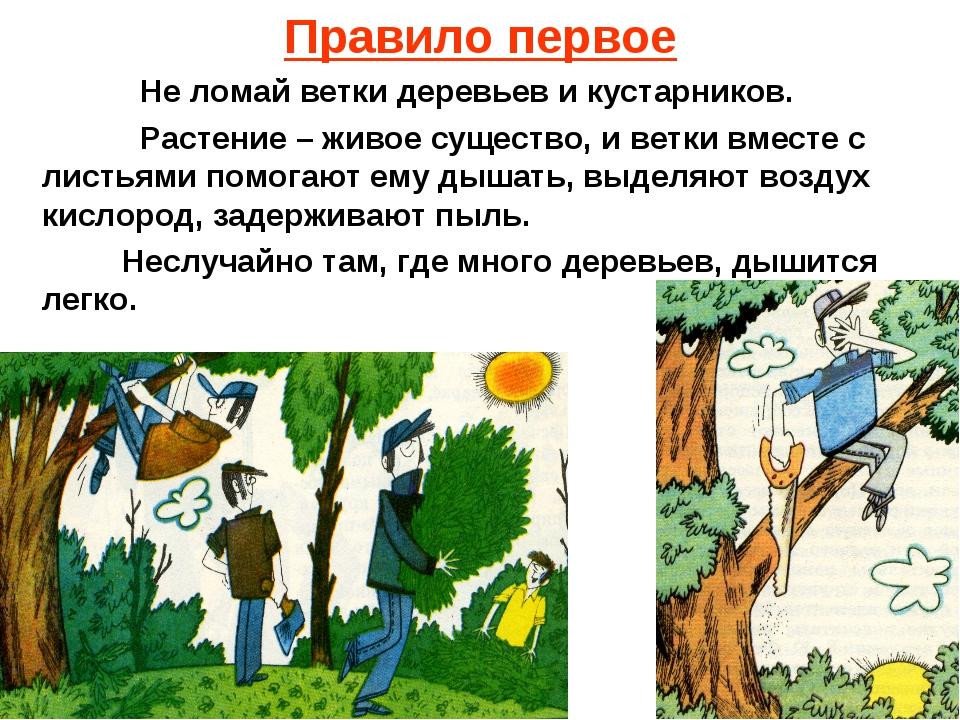Правило первое Не ломай ветки деревьев и кустарников. Растение – живое сущест...