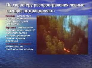 По характеру распространения лесные пожары подразделяют: Низовые - загорается