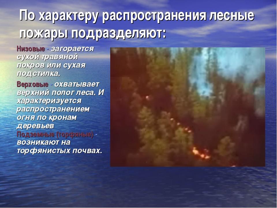 По характеру распространения лесные пожары подразделяют: Низовые - загорается...