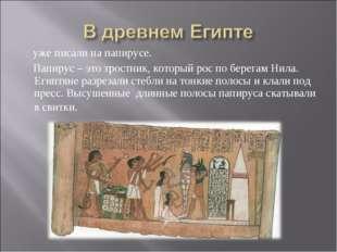 уже писали на папирусе. Папирус – это тростник, который рос по берегам Нила.