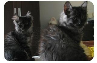 какие же факты о кошках есть
