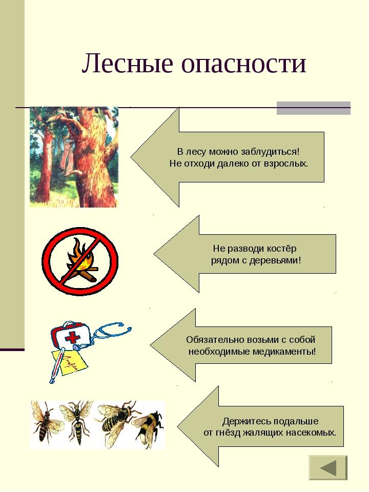 Лесные опасности Держитесь подальше от гнёзд жалящих насекомых. В лесу можно...