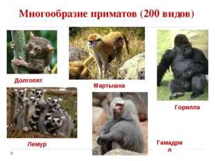 Многообразие приматов (200 видов) Долгопят Горилла Лемур Мартышка Гамадрил