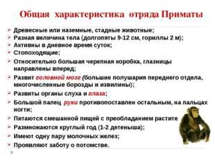 Общая характеристика отряда Приматы Древесные или наземные, стадные животные;