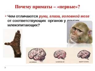 Почему приматы – «первые»? Чем отличаются руки, глаза, головной мозг от соотв