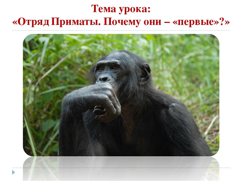 Тема урока: «Отряд Приматы. Почему они – «первые»?»