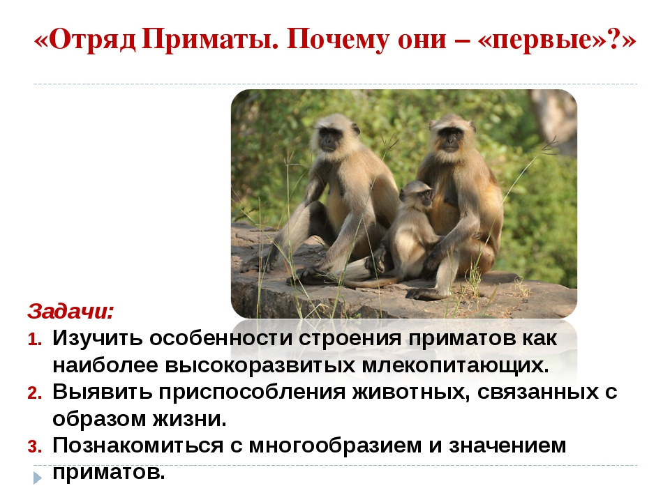 «Отряд Приматы. Почему они – «первые»?» Задачи: Изучить особенности строения...