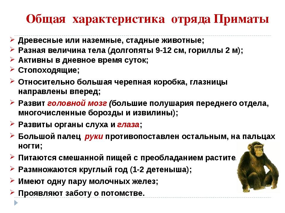 Общая характеристика отряда Приматы Древесные или наземные, стадные животные;...