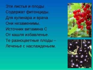 Эти листья и плоды Содержат фитонциды. Для кулинара и врача Они незаменимы. И