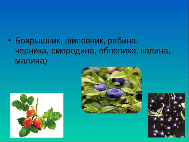 Боярышник, шиповник, рябина, черника, смородина, облепиха, калина, малина)