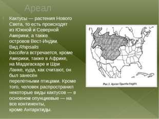 Ареал Кактусы— растенияНового Света, то есть происходят изЮжнойиСеверной