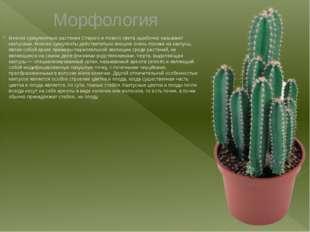 Морфология Многиесуккулентные растенияСтарогои Нового света ошибочно назыв
